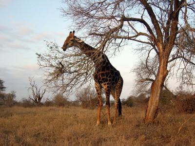 _SudAfrica2
