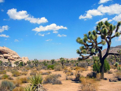 USA_Park_JoshuaTreeNP