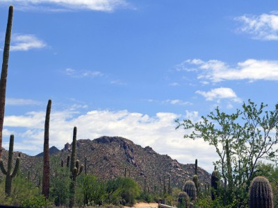 USA_Park_SaguaroNP