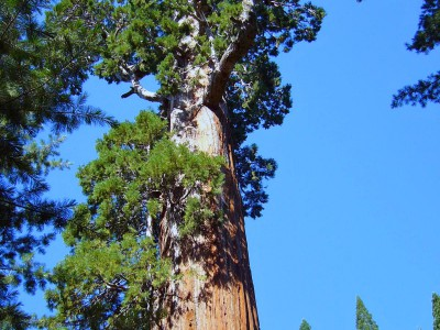 USA_Park_SequoiaNP